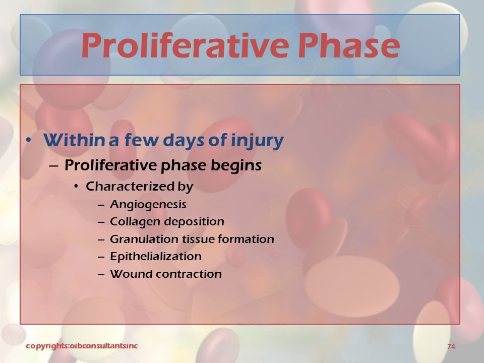 Proliferative Phase Within a few days of injury