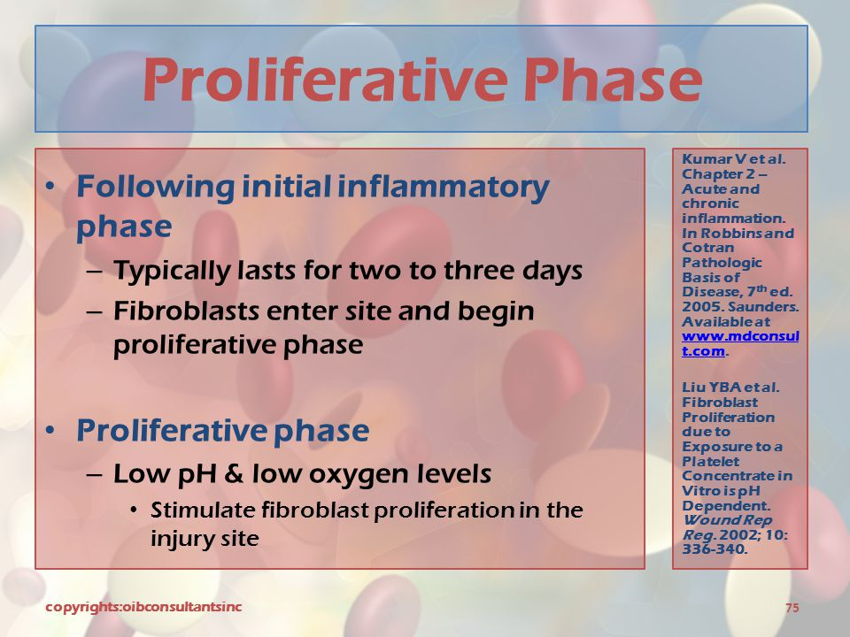 Proliferative Phase Following initial inflammatory phase