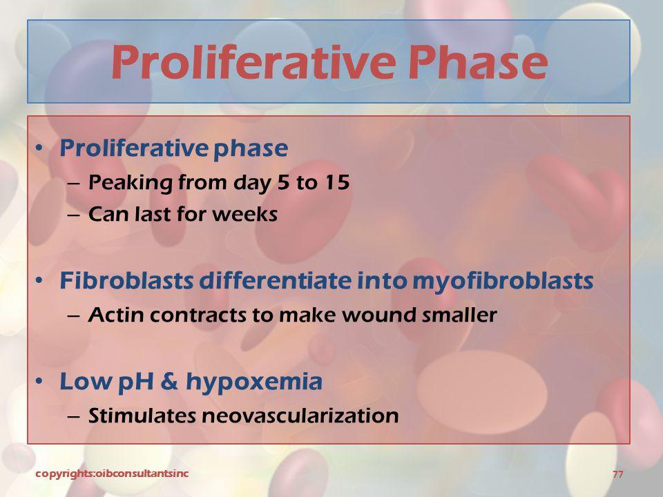 Proliferative Phase Proliferative phase