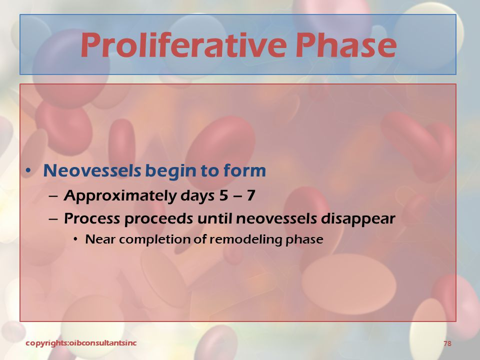 Proliferative Phase Neovessels begin to form Approximately days 5 – 7