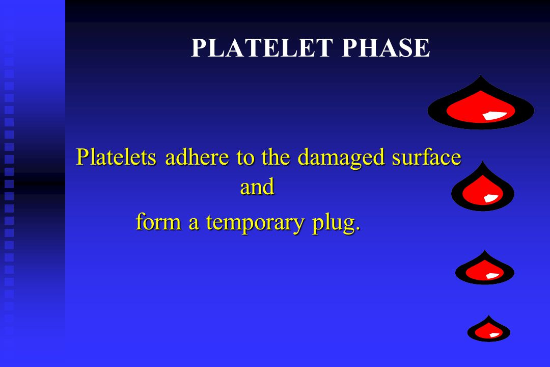 Platelets adhere to the damaged surface and