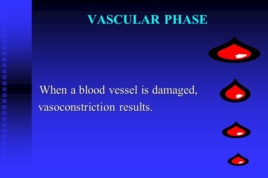 VASCULAR PHASE When a blood vessel is damaged,