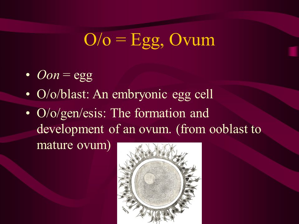 O/o = Egg, Ovum Oon = egg O/o/blast: An embryonic egg cell