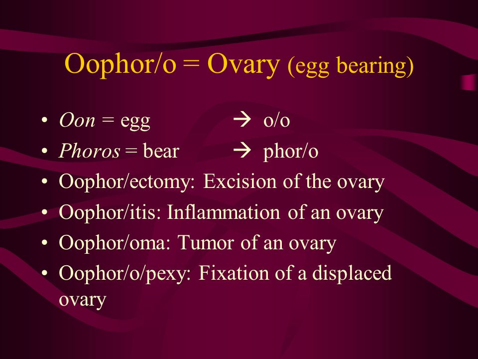 Oophor/o = Ovary (egg bearing)