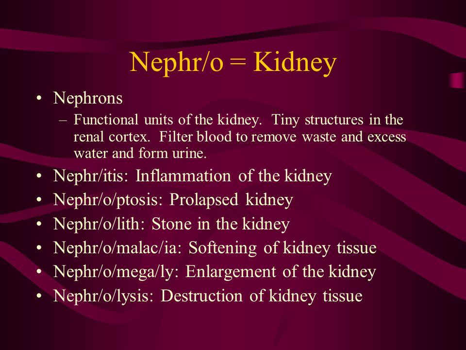Nephr/o = Kidney Nephrons Nephr/itis: Inflammation of the kidney