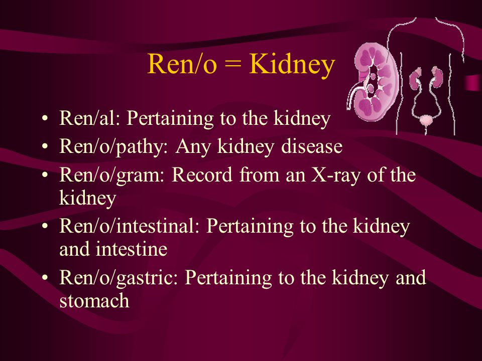 Ren/o = Kidney Ren/al: Pertaining to the kidney