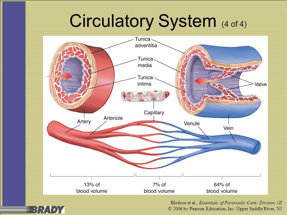 Circulatory System (4 of 4)