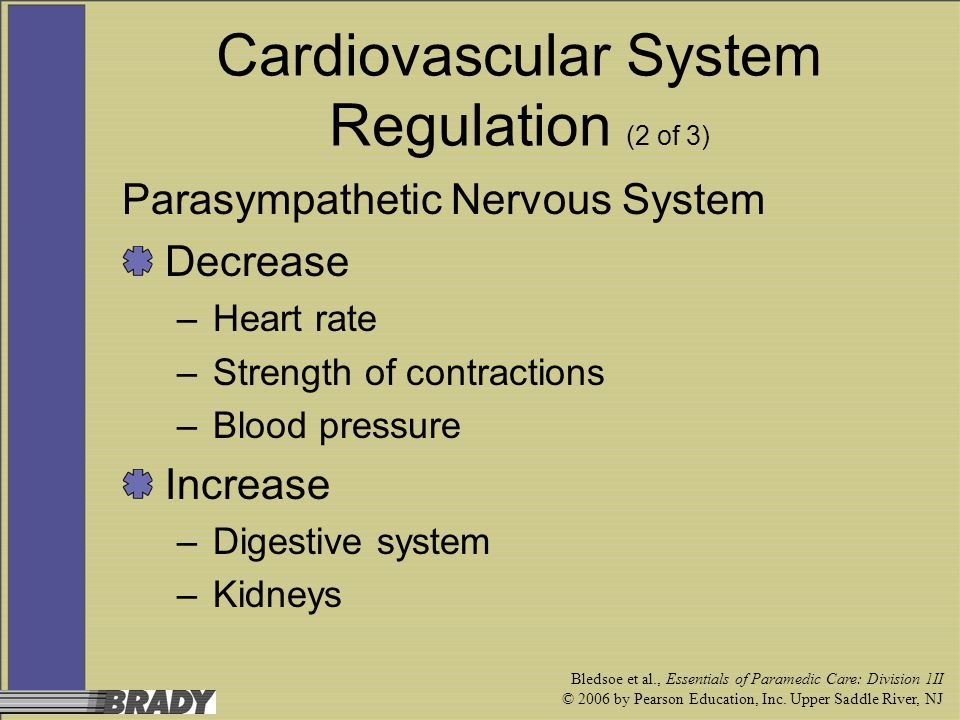 Cardiovascular System Regulation (2 of 3)