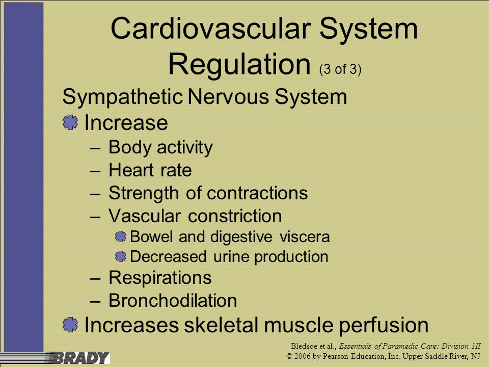 Cardiovascular System Regulation (3 of 3)