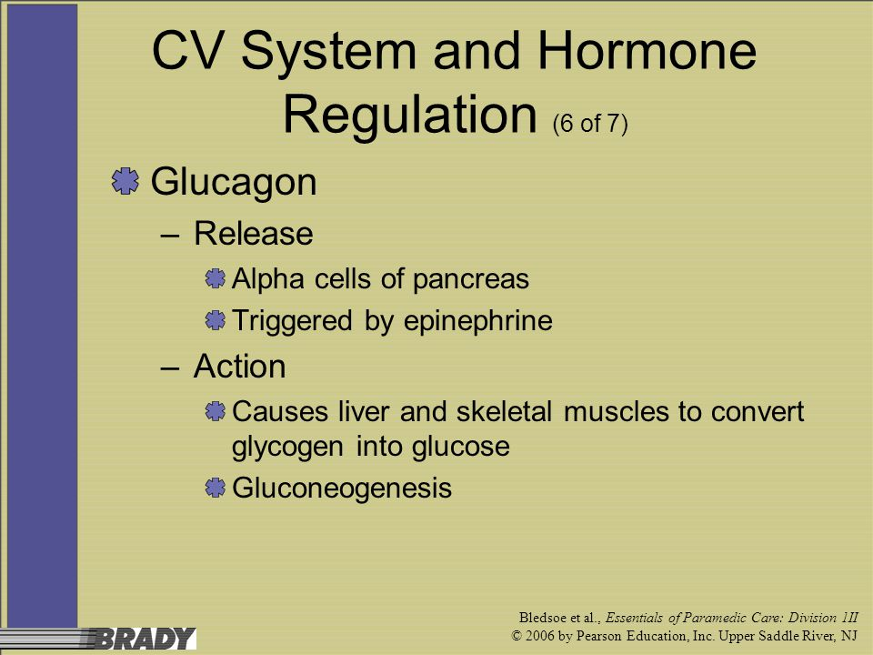 CV System and Hormone Regulation (6 of 7)