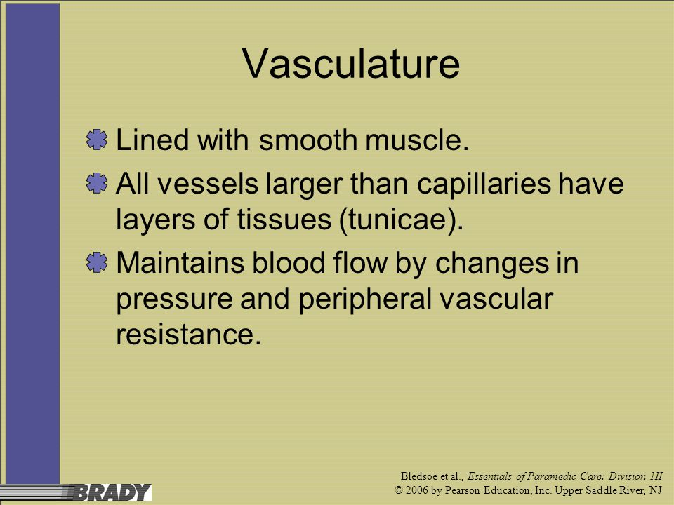 Vasculature Lined with smooth muscle.