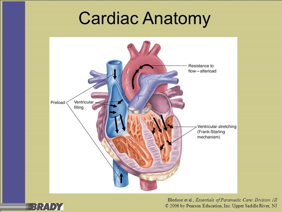 Cardiac Anatomy Bledsoe et al., Essentials of Paramedic Care: Division 1II.