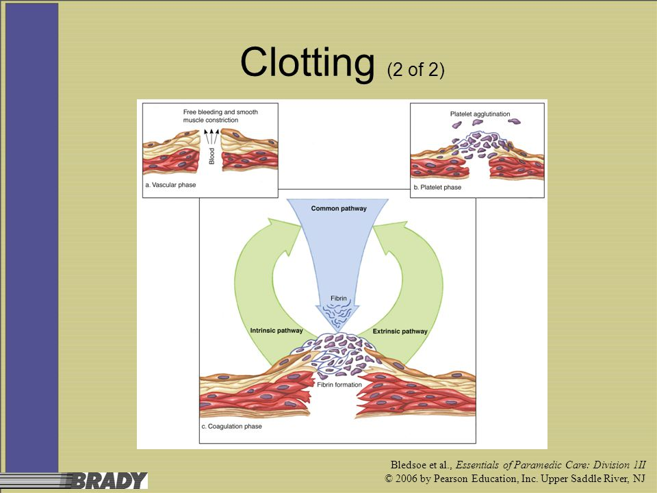 Clotting (2 of 2) Bledsoe et al., Essentials of Paramedic Care: Division 1II.