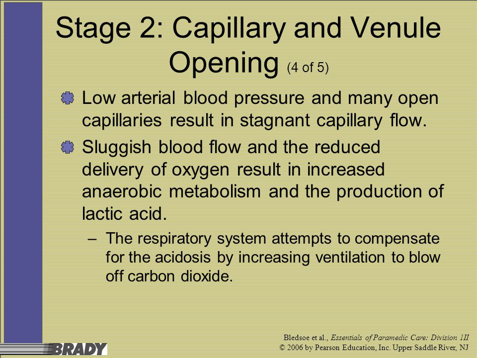 Stage 2: Capillary and Venule Opening (4 of 5)