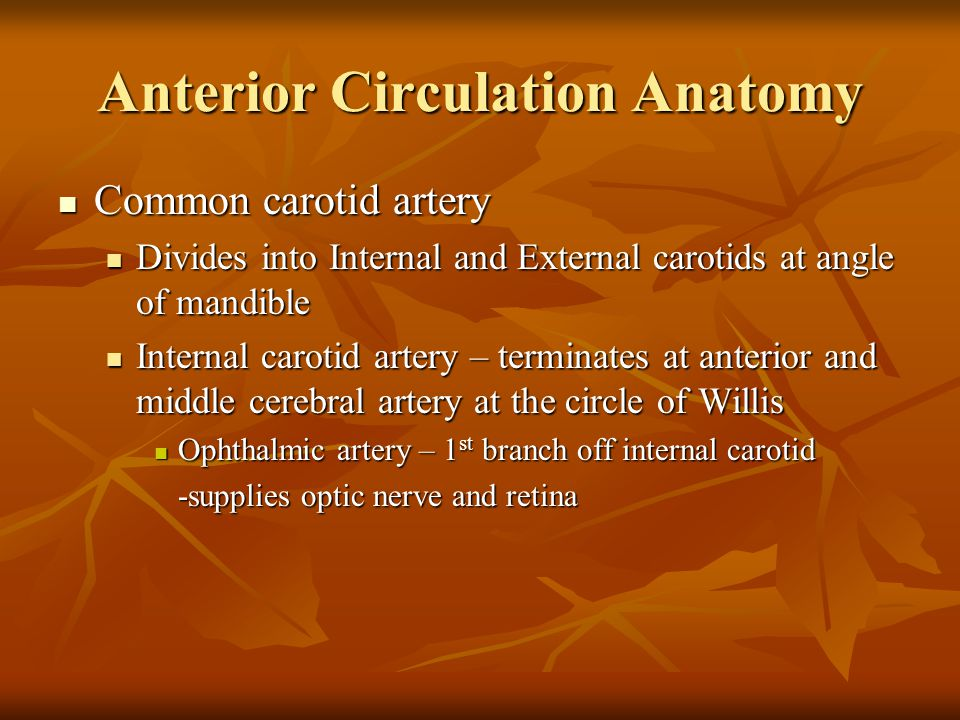 Anterior Circulation Anatomy