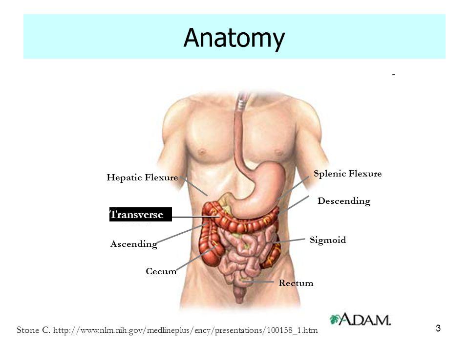 Anatomy Transverse Splenic Flexure Hepatic Flexure Descending Sigmoid