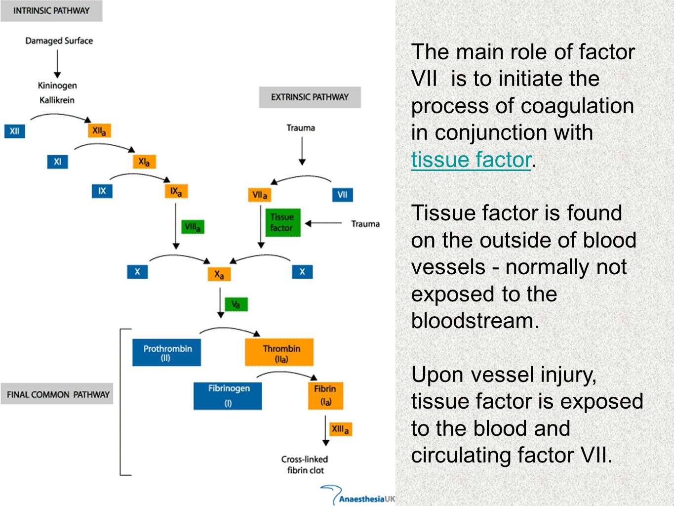 The main role of factor VII is to initiate the process of coagulation in conjunction with tissue factor.