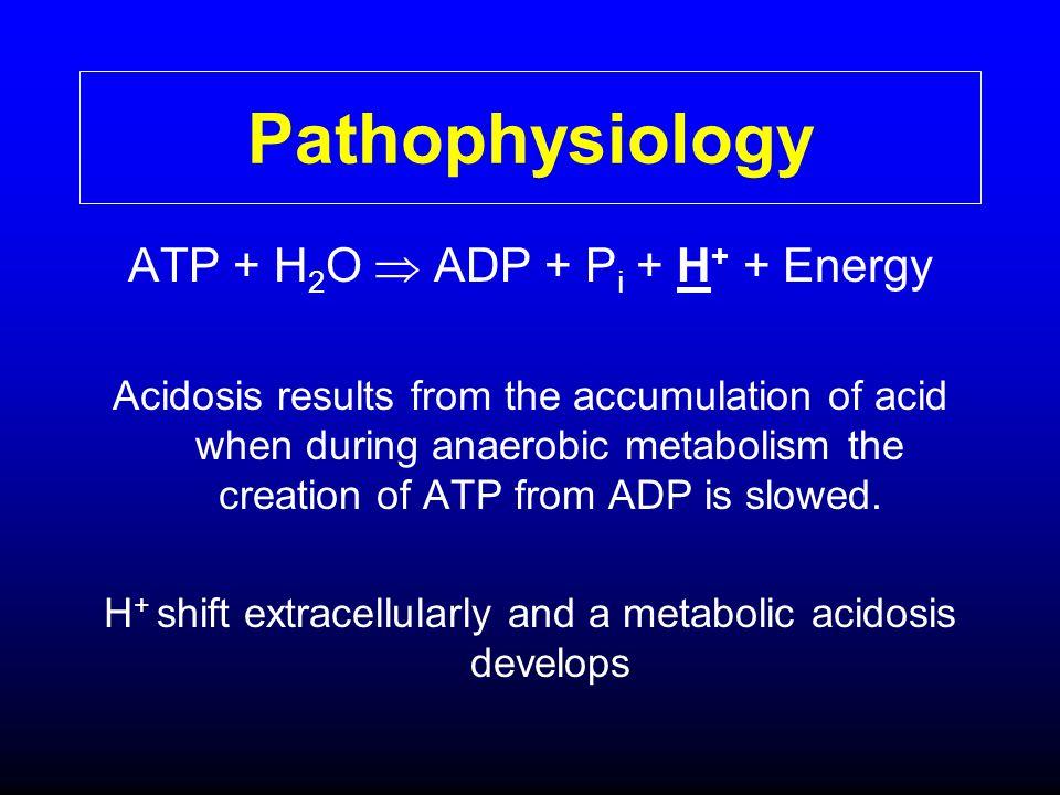 Pathophysiology ATP + H2O  ADP + Pi + H+ + Energy