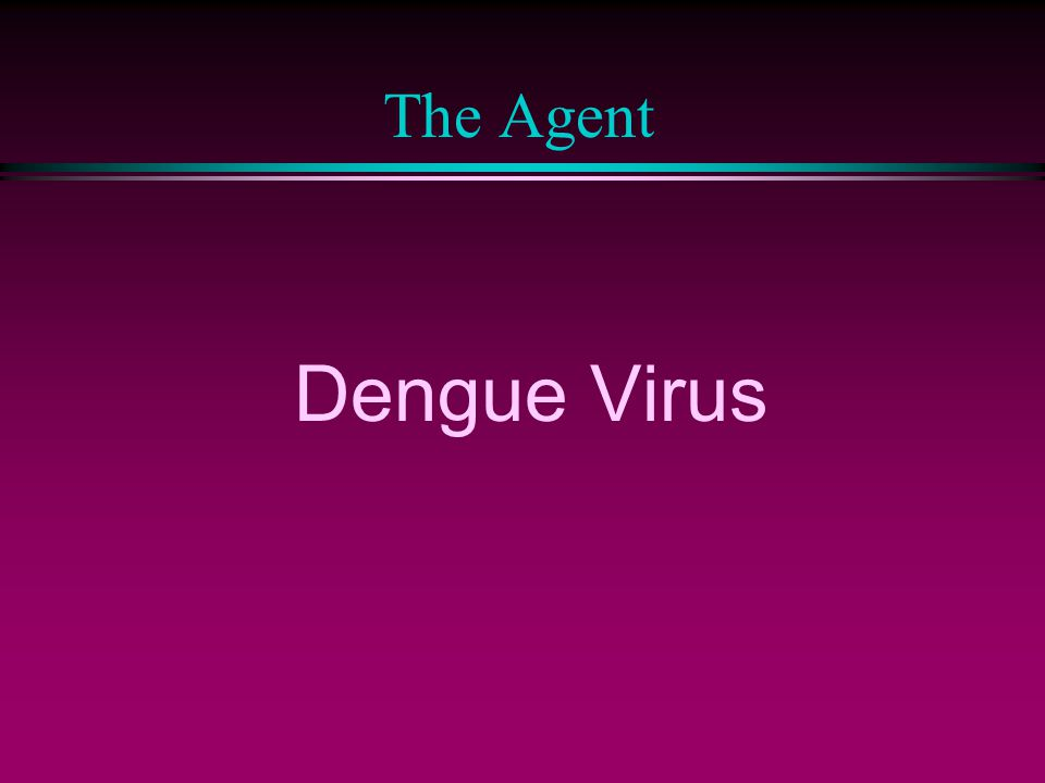 The Agent Dengue Virus