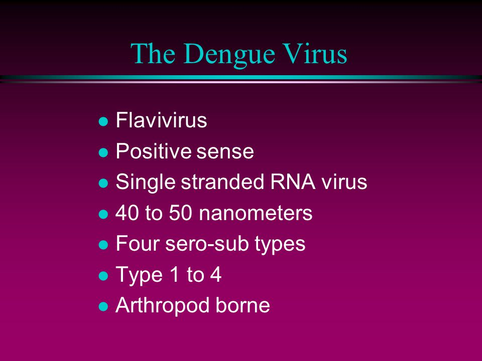 The Dengue Virus Flavivirus Positive sense Single stranded RNA virus