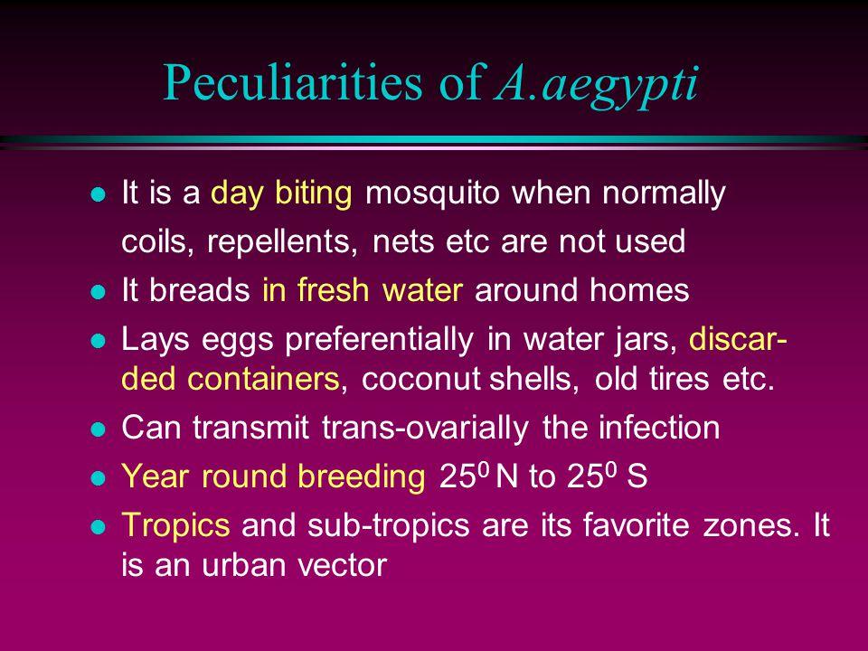 Peculiarities of A.aegypti