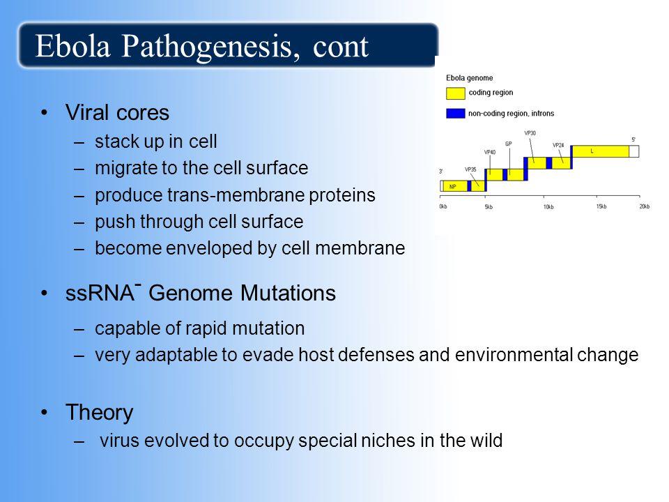 Ebola Pathogenesis, cont