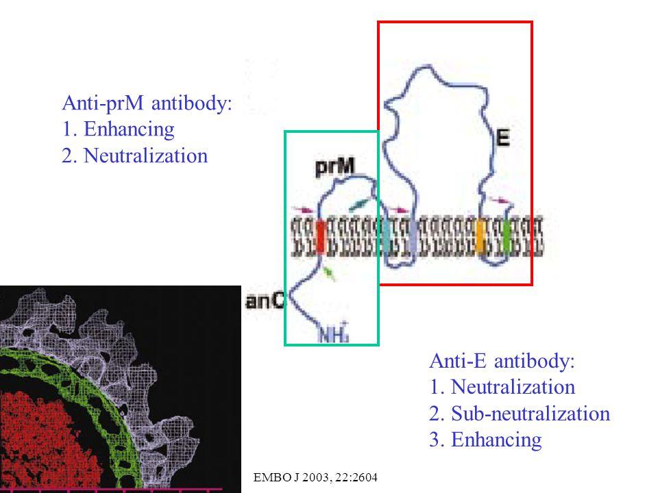 Anti-prM antibody: 1. Enhancing 2. Neutralization Anti-E antibody: