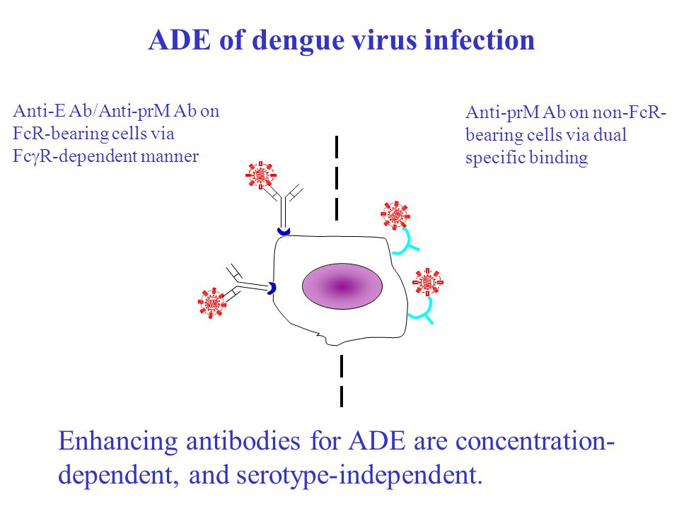 ADE of dengue virus infection