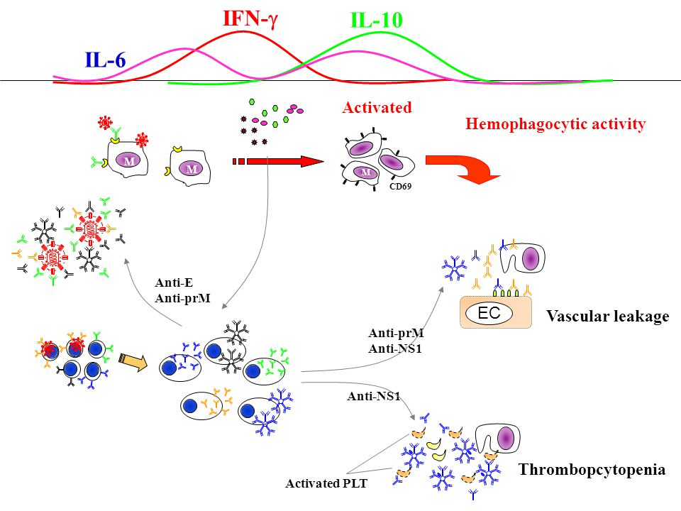 IFN-g IL-10 IL-6 Activated Hemophagocytic activity EC Vascular leakage
