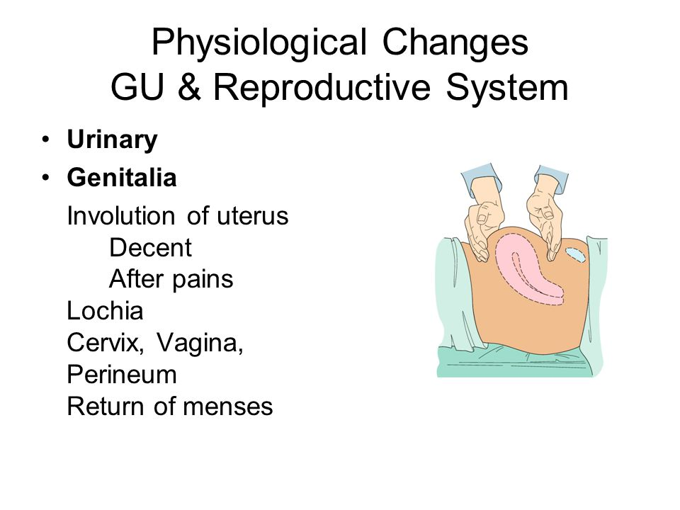 Physiological Changes GU & Reproductive System
