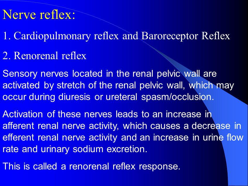 Nerve reflex: 1. Cardiopulmonary reflex and Baroreceptor Reflex