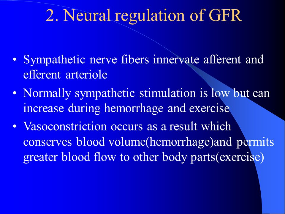 2. Neural regulation of GFR