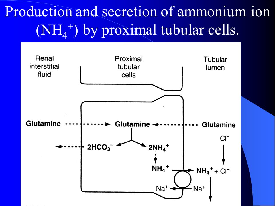 Production and secretion of ammonium ion (NH4+) by proximal tubular cells.