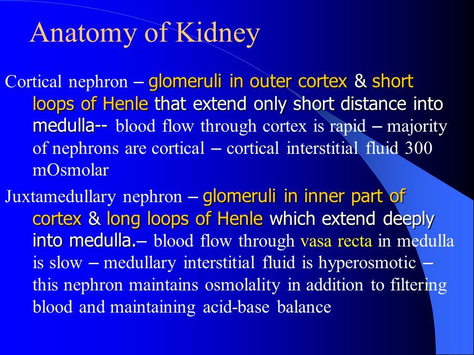 Anatomy of Kidney