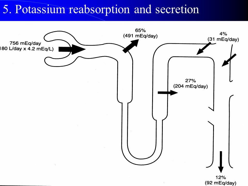 5. Potassium reabsorption and secretion