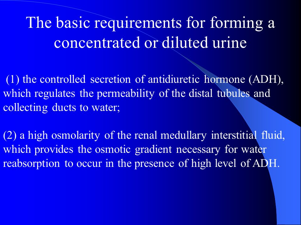 The basic requirements for forming a concentrated or diluted urine