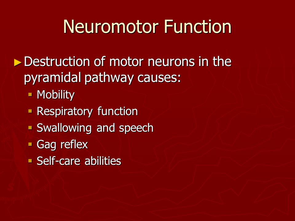 Neuromotor Function Destruction of motor neurons in the pyramidal pathway causes: Mobility. Respiratory function.