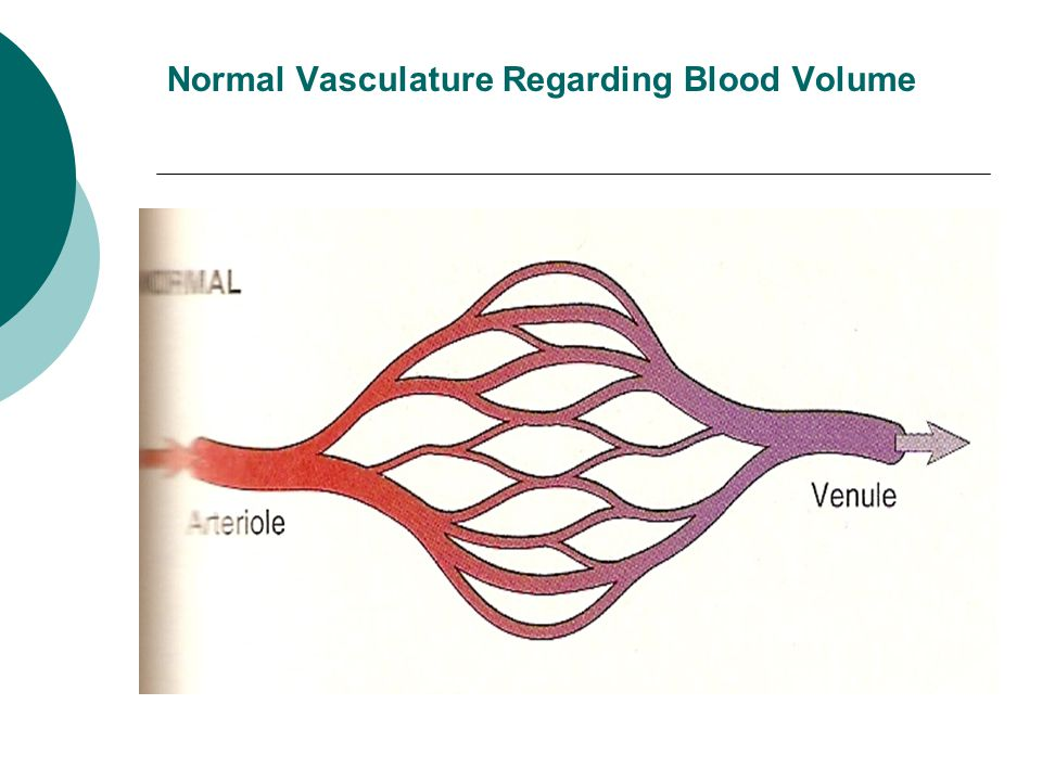 Normal Vasculature Regarding Blood Volume