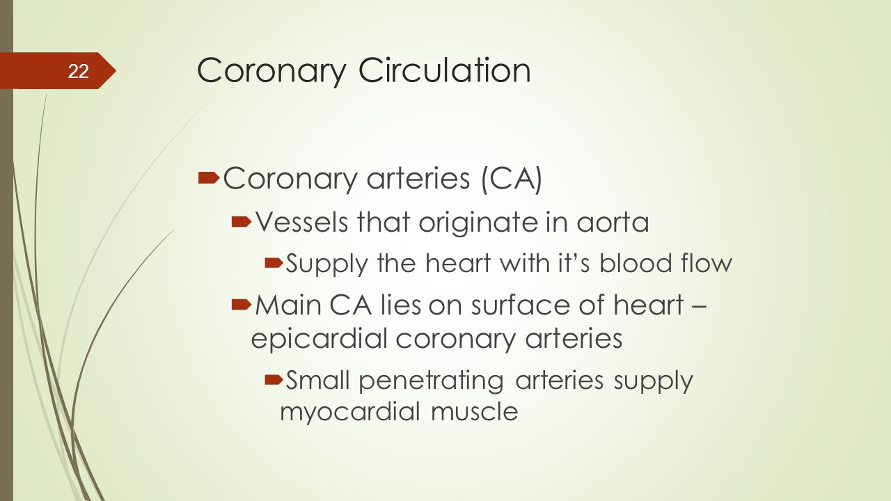 Coronary Circulation Coronary arteries (CA)