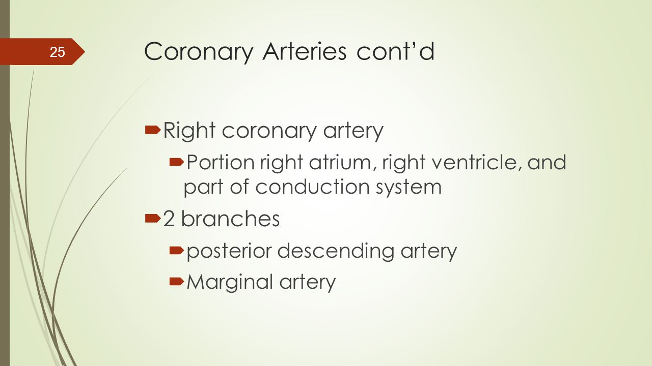 Coronary Arteries cont'd