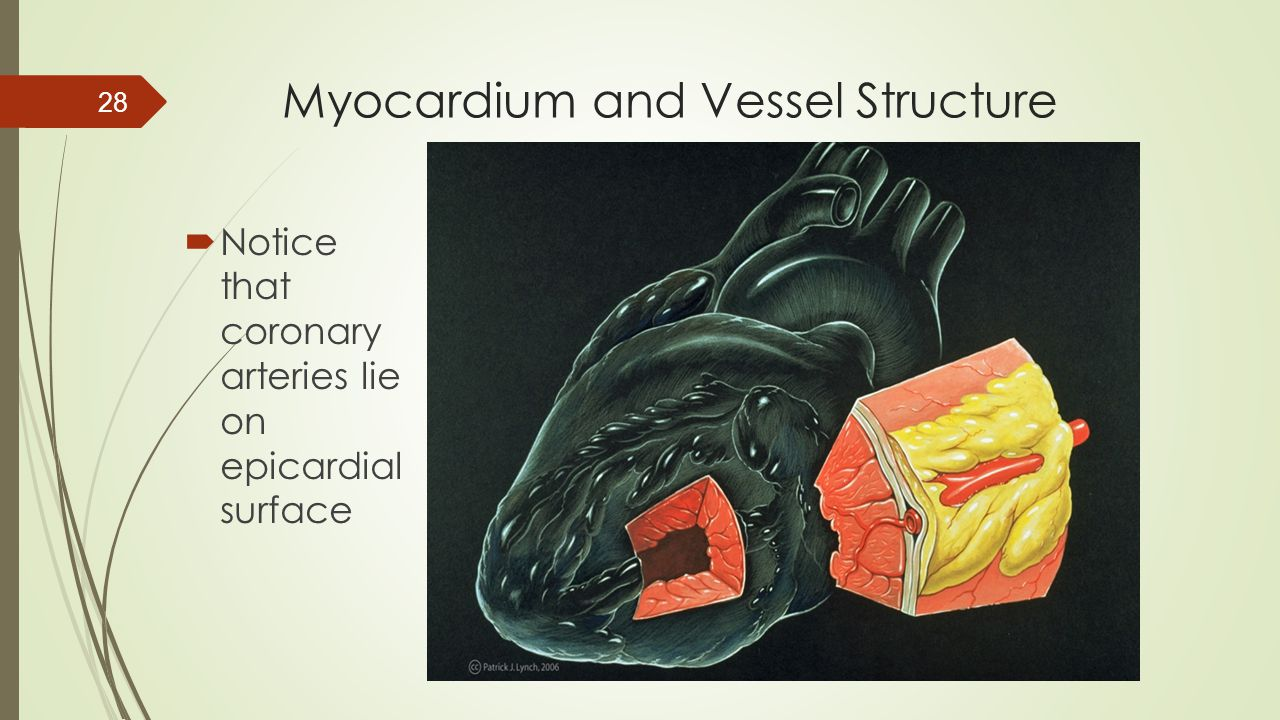 Myocardium and Vessel Structure