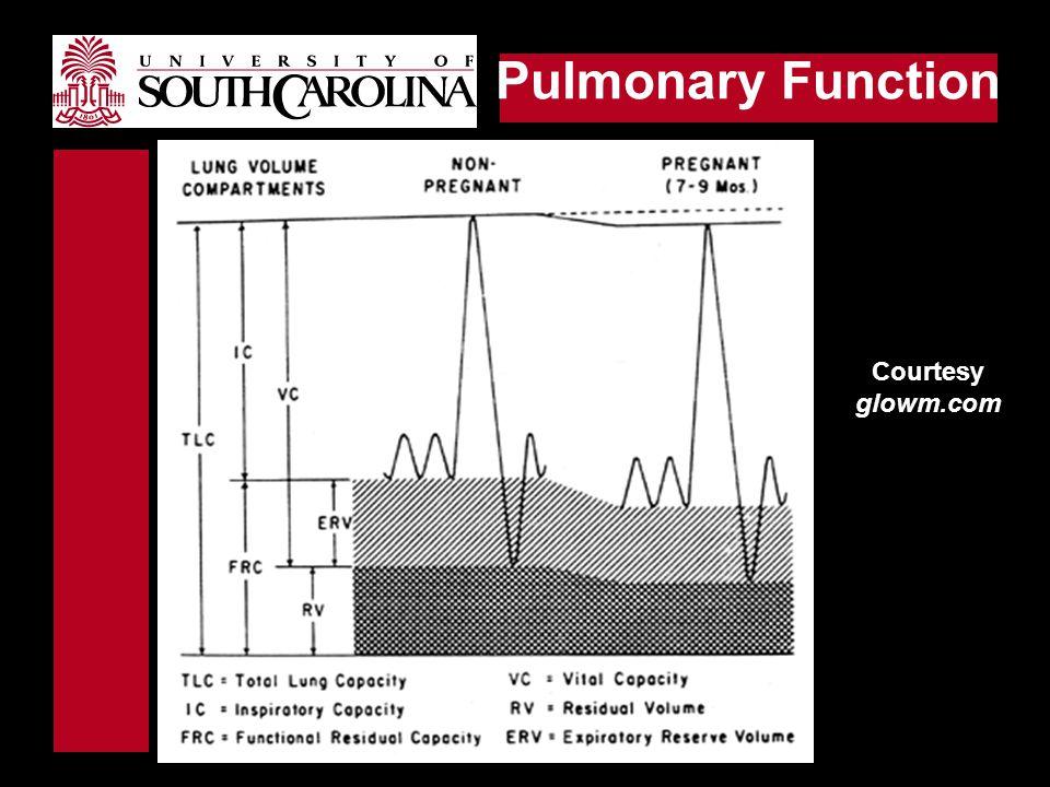 Pulmonary Function Courtesy glowm.com