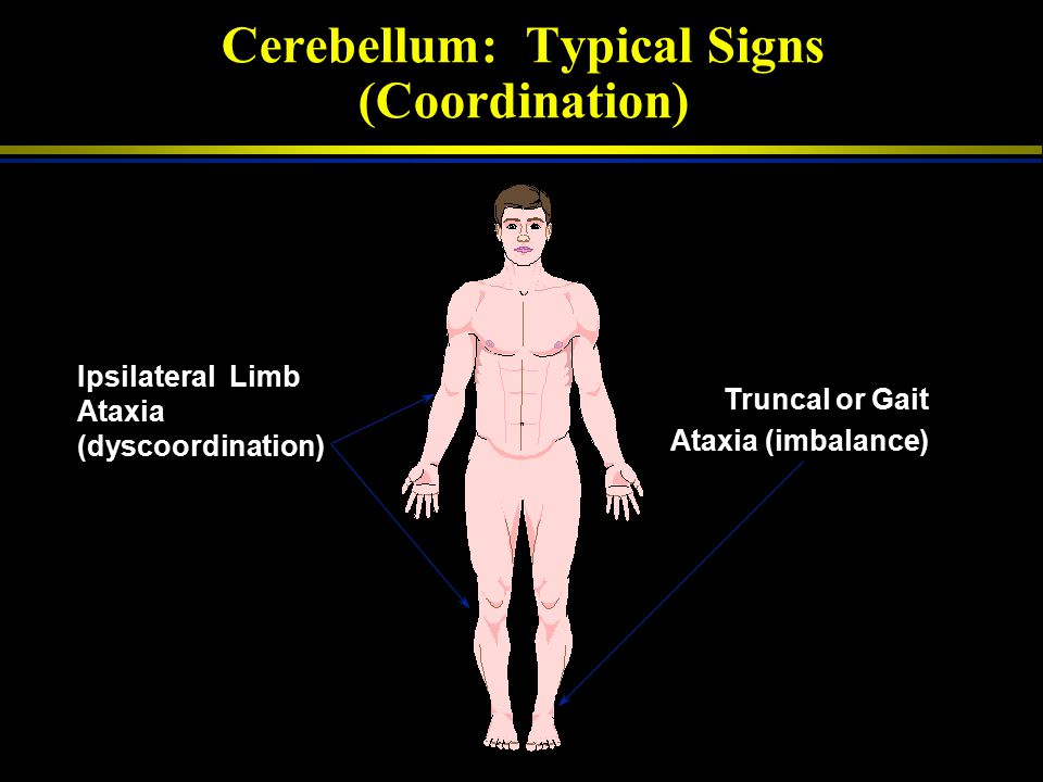Cerebellum: Typical Signs (Coordination)