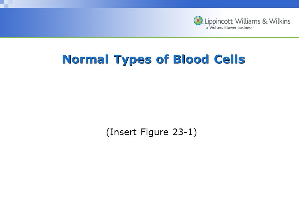 Normal Types of Blood Cells