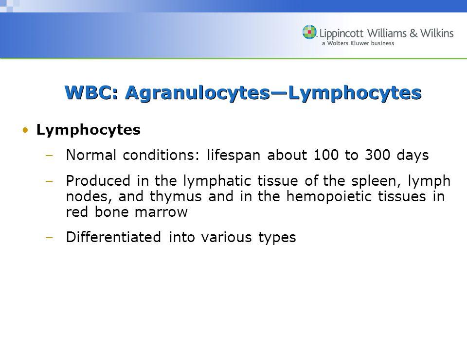 WBC: Agranulocytes—Lymphocytes