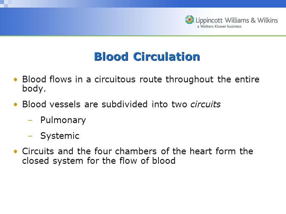 Blood Circulation Blood flows in a circuitous route throughout the entire body. Blood vessels are subdivided into two circuits.