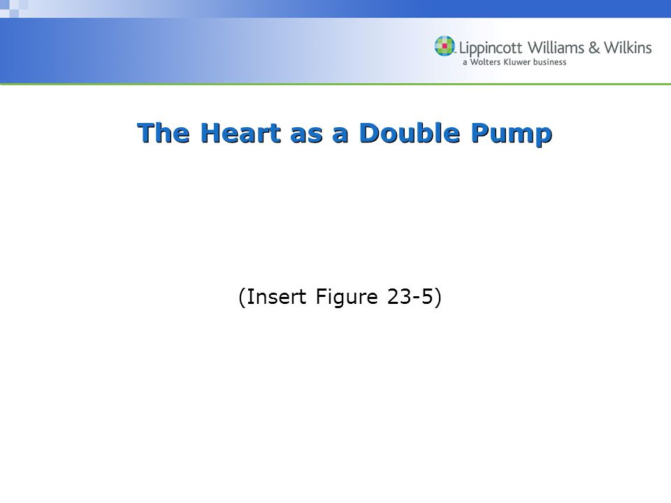 The Heart as a Double Pump