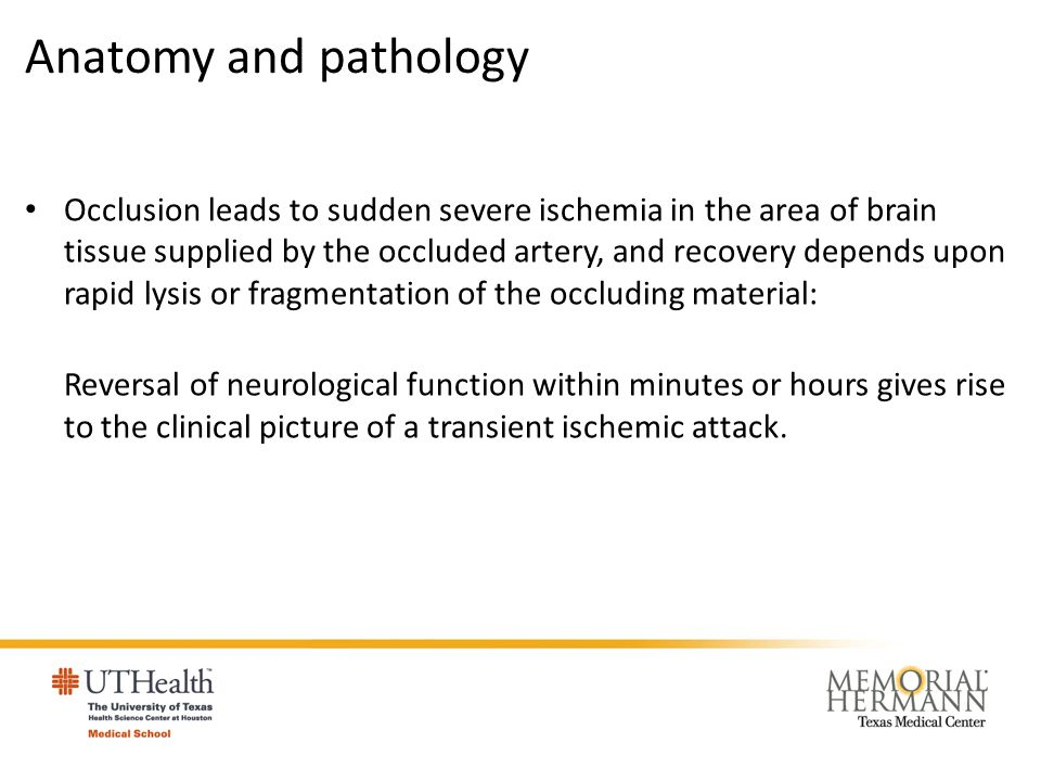 Anatomy and pathology