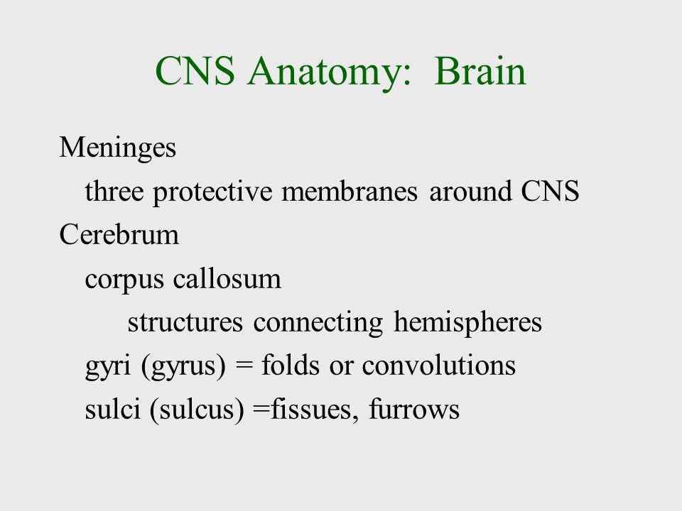 CNS Anatomy: Brain Meninges three protective membranes around CNS