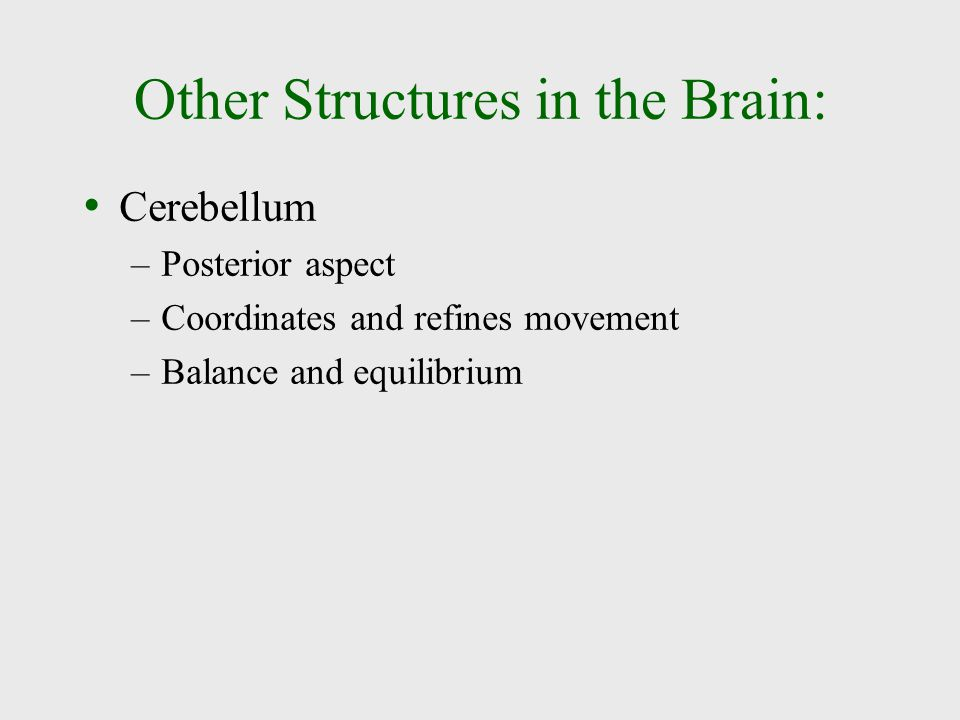 Other Structures in the Brain: